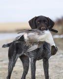 Hund mit einem Pintial Stockfoto