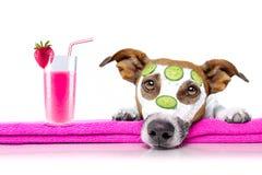 Hund mit einem Schönheitsmaske Wellnessbadekurort Lizenzfreie Stockfotos