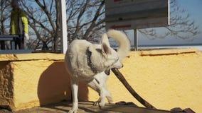 Hund mit einem Stock in seinem Mund läuft entlang die Straße im Park stock footage