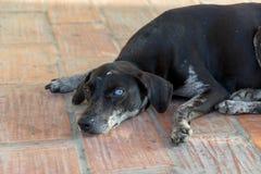 Hund mit einem verrückten Auge Stockfotos