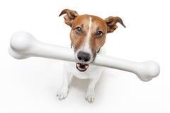 Hund mit einem weißen Knochen lizenzfreies stockbild