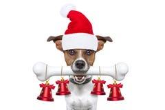 Hund mit einem weißen Knochen für Weihnachten stockfoto