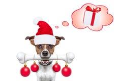 Hund mit einem weißen Knochen für Weihnachten Weihnachtsmann stockfotografie