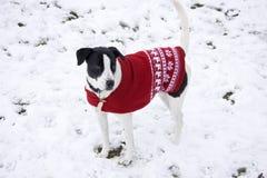 Hund mit einem Weihnachtspullover stockbilder