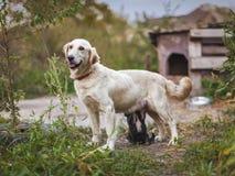 Hund mit einem Welpen nahe dem Stand stockbild