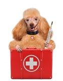 Hund mit einer Ausrüstung der ersten Hilfe Stockfotografie