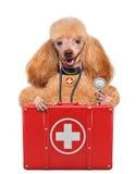 Hund mit einer Ausrüstung der ersten Hilfe Stockfoto
