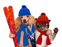 Hund mit einer Katze mit Skis Lizenzfreies Stockbild
