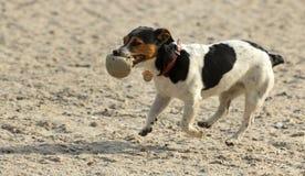 Hund mit einer Kugel Stockbild