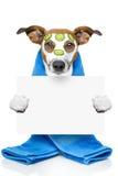 Hund mit einer Schönheitsmaske Lizenzfreies Stockfoto