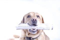 Hund mit einer Zeitung stockfotografie