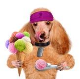 Hund mit Eiscreme Stockfoto