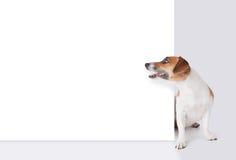 Hund mit Fahne Stockfotografie