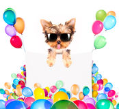 Hund mit Feiertagsfahne und bunten Ballonen Stockfotografie