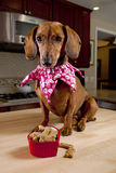 Hund mit Festlichkeiten in geformter Schüssel des Inneren stockbilder