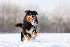 Hund mit Festlichkeitstasche in der Schnauze im Schnee lizenzfreies stockfoto