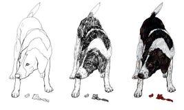 Hund mit Fleisch Stockbild