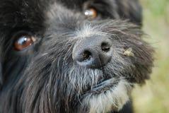 Hund mit Fliege auf Wekzeugspritze lizenzfreies stockbild