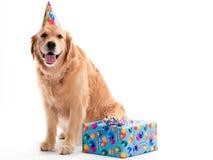 Hund mit Geburtstaggeschenk Lizenzfreies Stockfoto