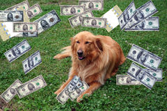 Hund mit Geld Stockbild