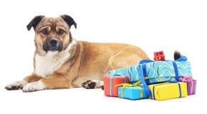 Hund mit Geschenke lizenzfreie stockbilder