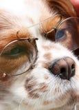 Hund mit Gläsern Stockfotografie