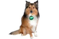 Hund mit grüner Weihnachtskugel Lizenzfreie Stockfotos