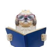 Hund mit großen lustigen Gläsern liest ein Buch Stockfotografie
