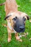 Hund mit großer Wekzeugspritze Lizenzfreie Stockfotografie