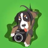 Hund mit Hängeohren mit einer Kamera auf dem Gras lizenzfreie abbildung