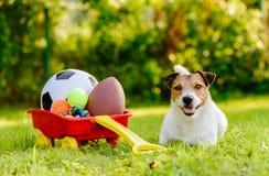 Hund mit Hort von Spielwaren im Warenkorb, der Sie einlädt zu spielen lizenzfreies stockfoto