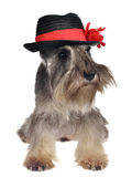 Hund mit Hut Stockfotografie