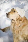 Hund mit Hut lizenzfreies stockbild