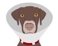 Hund mit Kampfläufer Lizenzfreies Stockfoto