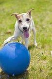 Hund mit Kugel lizenzfreies stockfoto