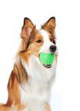 Hund mit Kugel Stockfotos