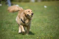 Hund mit Kugel Lizenzfreie Stockfotos