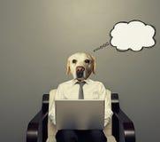 Hund mit Laptop Lizenzfreie Stockfotos