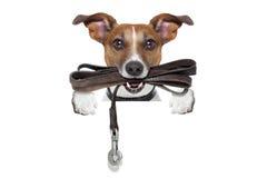 Hund mit lederner Leine Stockbilder