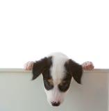 Hund mit leerem Eber Stockfoto