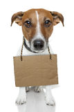 Hund mit leerer Pappe Stockfoto
