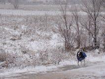 Hund mit Mantel im Schnee lizenzfreies stockbild