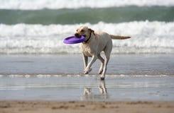 Hund mit Platte Stockbilder