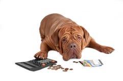 Hund mit Rechner, Cents und Kreditkarten Stockfotos