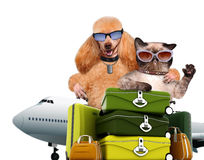 Hund mit Reisenden einer Katze Lizenzfreies Stockbild