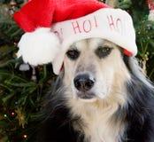 Hund mit Sankt-Hut lizenzfreies stockfoto