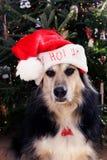 Hund mit Sankt-Hut lizenzfreies stockbild