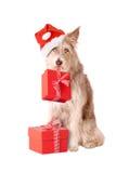 Hund mit Sankt-Hut und -geschenken Stockbild
