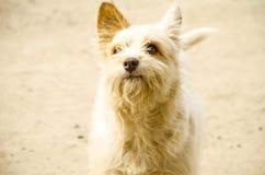 Hund mit schönen Augen Lizenzfreie Stockfotos