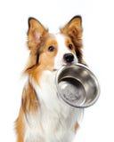 Hund mit Schüssel Stockfoto